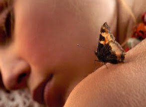 butterfly sleep